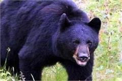 bear attack on woman