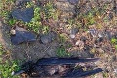 crow found dead near the park created a stir