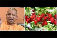 strawberry festival cm yogi said by launching virtual