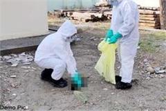 2 guest birds found dead in dehra beat