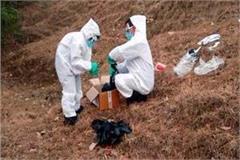 12 crow found dead in mandi