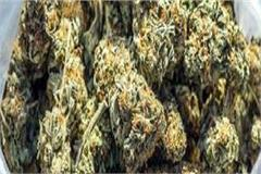 2 arrested with consignment of ganja
