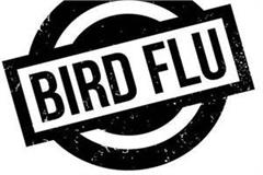 alert issued in himachal due to knock of bird flu