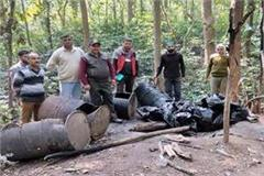 forest department team destroy the raw liquor in forest