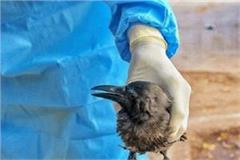 dead ravens increased people s concern op deserted jindal park