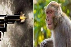 a non community youth shot a monkey people angry with death reached