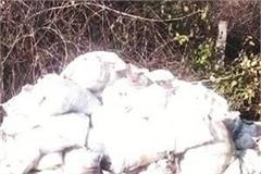 bird flu hundreds of chickens died after being stuffed in sacks