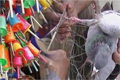 china dor selling secretly kites market before basant panchami