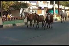 a herd of horses races on the streets of the city