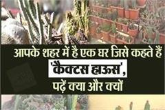 cactus house in jalandhar city