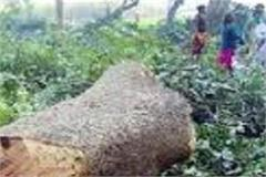 8 trees cut kher in dhar police recovered wood