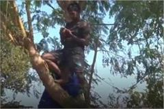 children study online by climbing trees in this district of mp