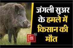 farmer killed in wild animal attack in west champaran