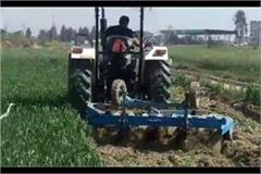 farmer destroyed 3 acres of crop in jhajjar