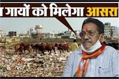 mp govt gave shelter to cows after publishing punjab kesari news