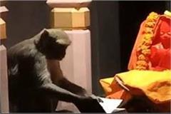 monkey started reading ramayana in the temple during