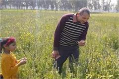 retired farmer colonel harishchandra of barabanki grows chia seeds