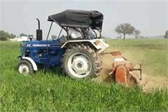 farmers drive tractor on standing crop in jind