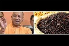 cm yogi to inaugurate online 3 day kalamak rice festival from today
