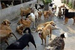 17 crore expenditure on dogs sterilization in mp last 5 years
