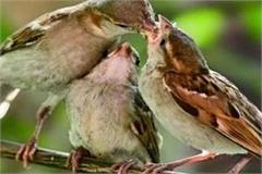 world sparrow day oh bird little bird   come again in angana
