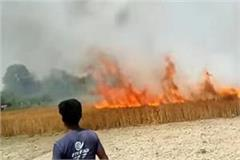farmer s burnt crop caught fire burnt fire