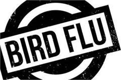 bird flu knocked in theog