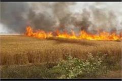 wheat field set on fire in noida 150 bigha crop ashes