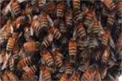 bee bites injure a dozen people