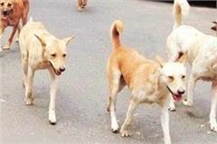 dog shopkeepers frightened by the terror of dogs