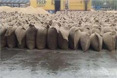 thousands of wheat harvested due to rain in the grain market
