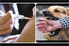 dog bite vaccine replaces corona vaccine