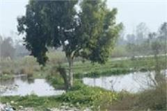 turtle move running noorpur town s proposed garbage plant