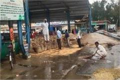 unseasonal rain soaked farmers  desires