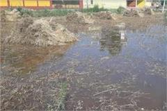 acres crop submerged due to canal breakdown