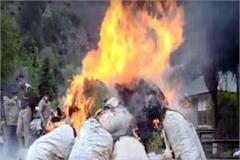 police burn the pyre of drugs in kullu
