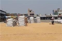 purchase of crop started in ambala mandi
