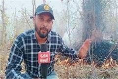 mp s forests engulfed in flames wild life of wildlife