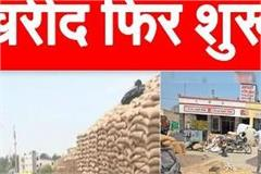 government procurement of wheat resumed in mandis administration prepares
