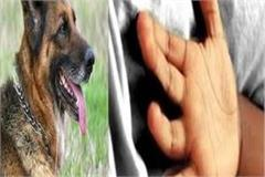 chuvadi dog child death
