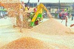 wheat procurement exceeds target this time in haryana
