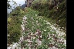 hailstorm destroyed water crop of fruits and vegetables on farmers  hard work