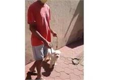 awesome police of strange mp owner arrested with dog