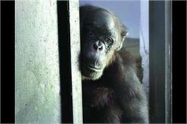 ed seized chimpanzees and south american monkey
