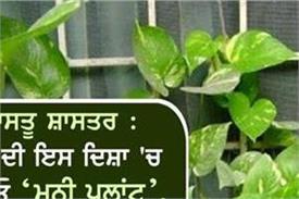 vastu shastra home direction money money plant