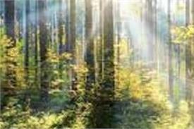 gurbani nature more than 60 plants mentioned in sri guru granth sahib ji