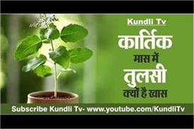 why is tulsi special in the month of kartik