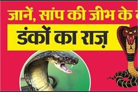 secret of snake s tongue