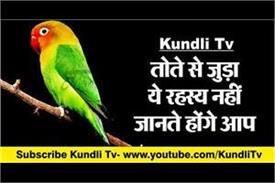 vastu tips related to parrot