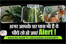 according to vastu beware of these kind of plants